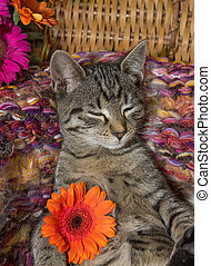 Sweet 12 weeks old kitten with a flower.