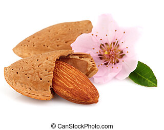 Sweet almonds with flower