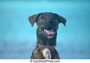 Beautiful cunucu dog at the beach in Aruba.