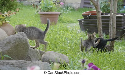 Sweet baby cats enjoying a summer day and nature playing on...