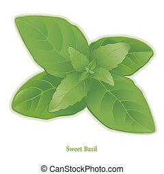 Sweet Basil Herb - Sweet Basil, popular herb, aromatic...