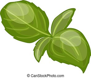 sweet basil leaves. Different types of basil Genovese
