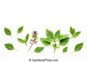 Sweet Basil leaves on white