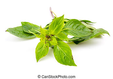 Sweet basil vegetable on white background