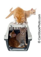 Sweet cat kittens in transport box - Very sweet cat kittens...