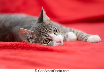 sweet cat on red