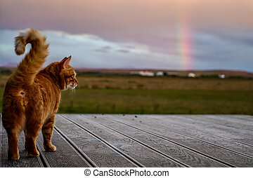 cat on terrace looks after the rainbow on iceland - Sweet...
