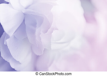 sweet color carnation in soft style for background