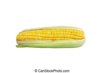Sweet corn 2