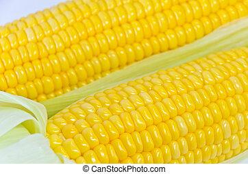 Sweet corn ears