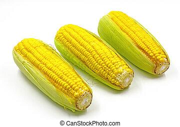 Sweet Corn isolated on white background.