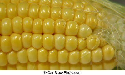 Sweet Corn On The Cob Dolly