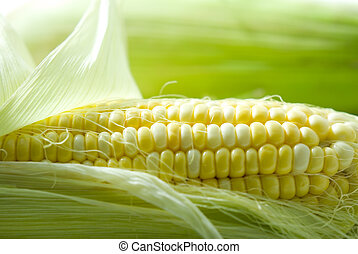Sweet Corn - Freshness Sweet Corn