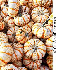 Sweet Dumpling squash at the market
