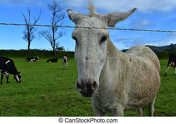 Sweet Face of a Burro Standing in a Grass Field