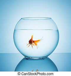 sweet goldfish in a fishbowl