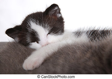 Sweet Kitten on White Background Looking Adorable