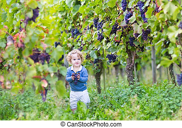 Sweet little baby girl picking fresh ripe grapes in a beautiful