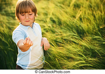 Sweet little boy playing in wheat field at sunset in summertime. Kid showing small grain