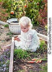 Sweet Little Girl Child Picking Carrots from Garden