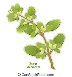 Sweet Marjoram Herb