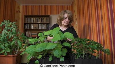 Sweet middle-aged woman at home. She sprays the seedlings,...