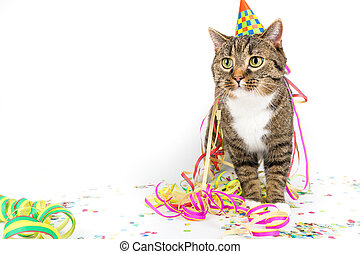 sweet party tiger cat - tiger cat with funny party...