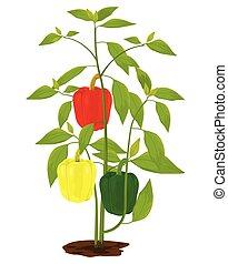 sweet pepper plant on white background vector design