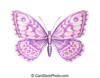 Sweet pink butterfly detailed painting. Isolated on white