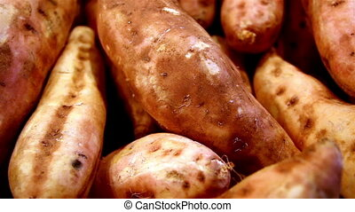 Sweet potatoes all in line