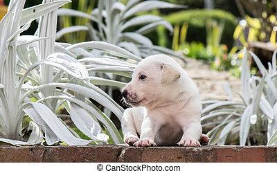 Sweet Puppy in the garden