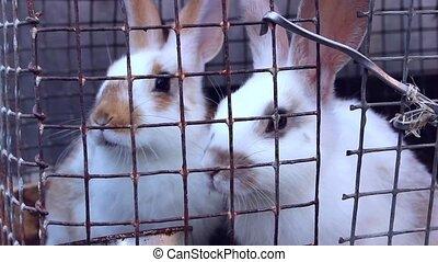 rabbits on the farm - sweet rabbits on the farm