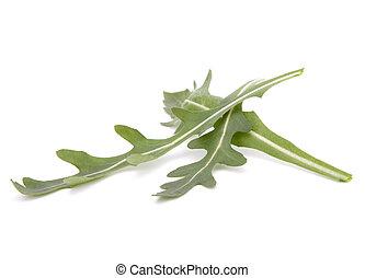 Sweet rucola salad or rocket lettuce leaves