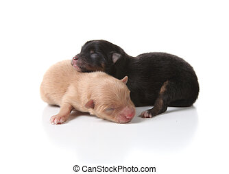 Sleeping Newborn Puppy Dogs