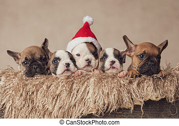 sweet small santa helpers waiting for christmas