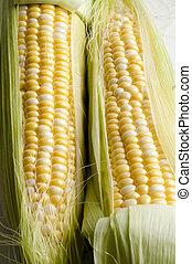 sweetcorn - Fresh sweet corn on the cob with leaves