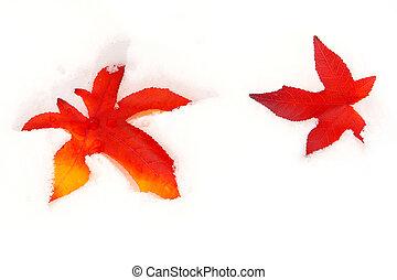 sweetgum, feuilles, baissé, neige