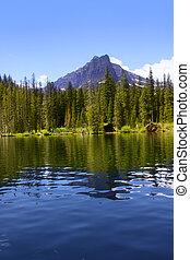 swift, 흐름, 호수
