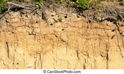 Swift nest with chicks in the hillside - Swift nests in the...