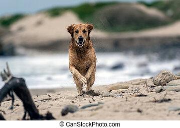 Swift to cross the coastal shoreline.