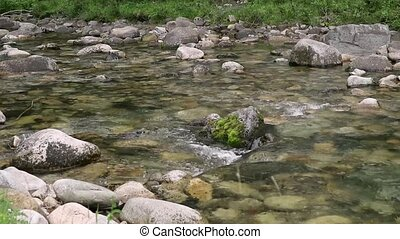 Swift water flow in small mountain river, trees along the...