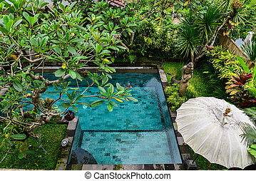 swiming, jardim, costas, piscina, jarda