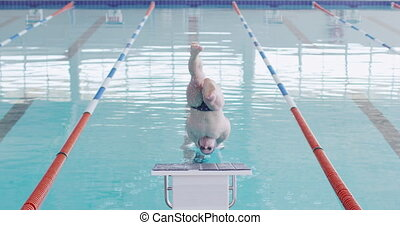 Swimmer diving into the pool - Rear view of Caucasian male ...