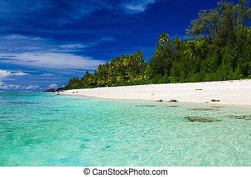 Swimming beach with palm trees on tropical island Rarotonga, Cook Islands