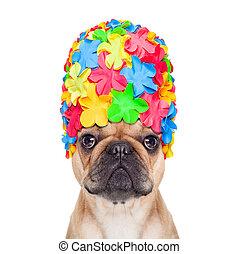 swimming cap dog - french bulldog dog wearing a bathing or...