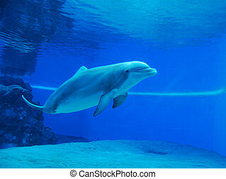 Swimming Dolphin - Dolphin swimming in clear blue water ...