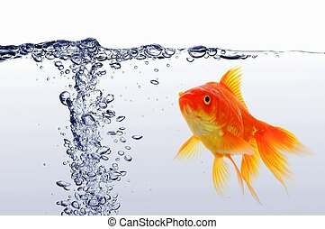 goldfish - swimming goldfish in fishtank with water or air...