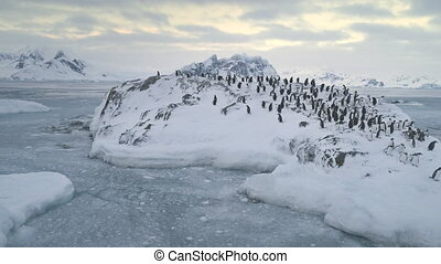 Swimming, jumping penguin colony. Antarctica.