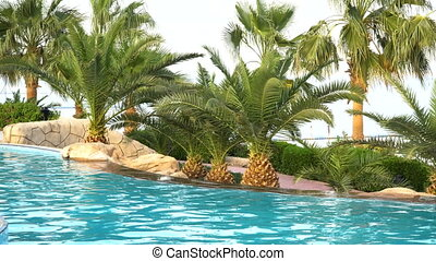 swimming pool and palm trees on seaside in hotel