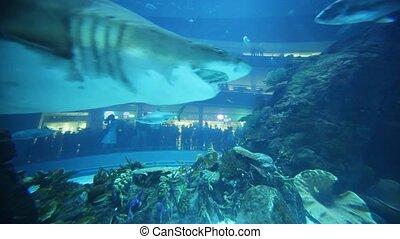 Swimming shark on very close shot in aquarium inside Dubai Mall
